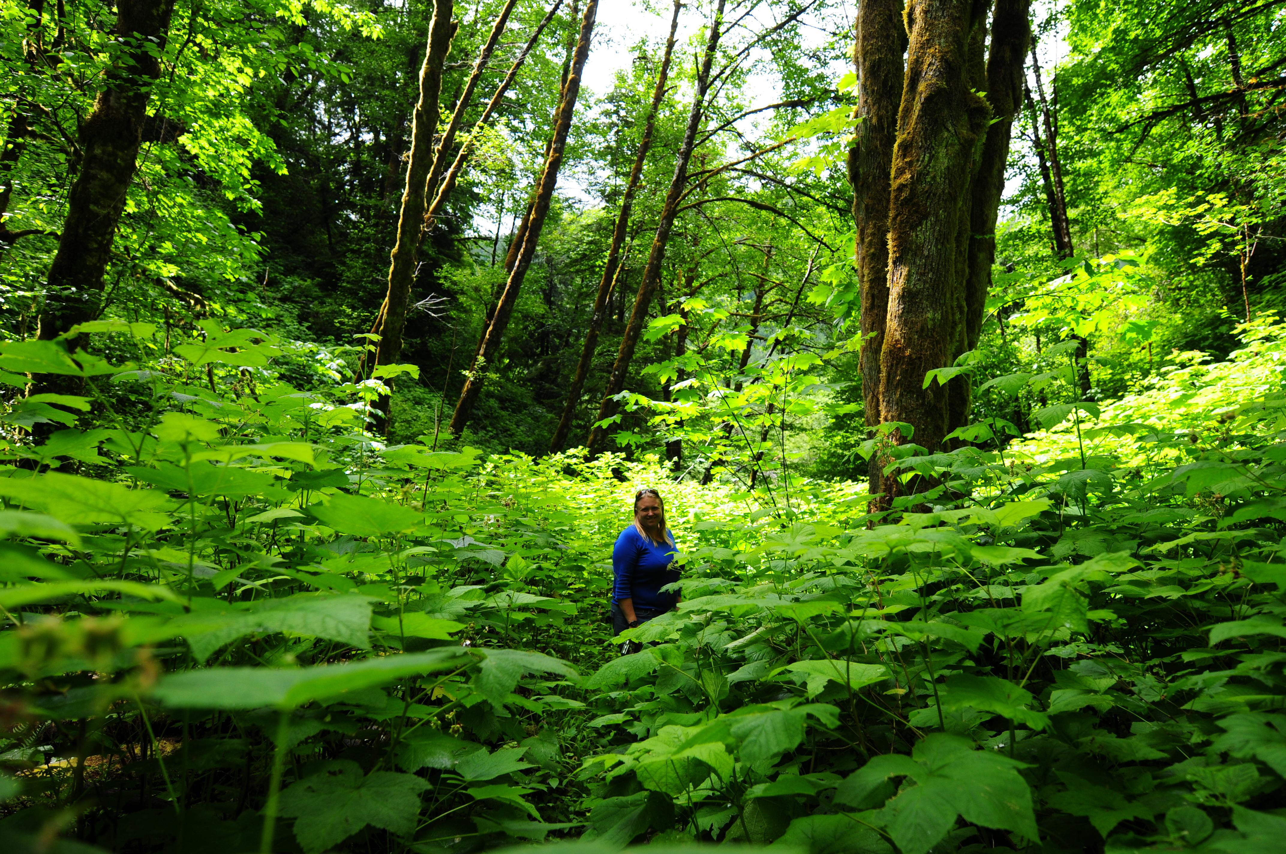 Oregon Travels Tillamook State Of Wilderness
