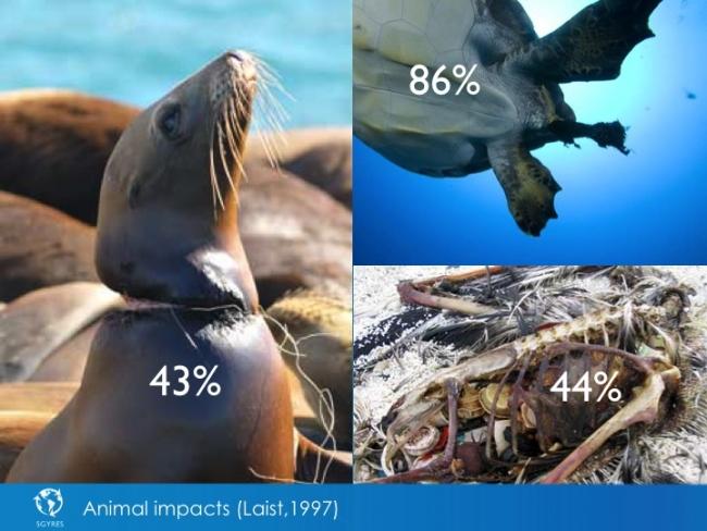 animal impact plastic