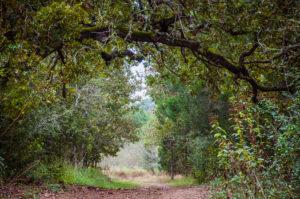 2016_11_05-texas_roundup_bastrop-7