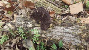 mason creek fungi