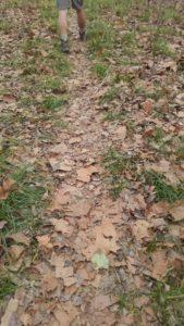 mason creek leaves