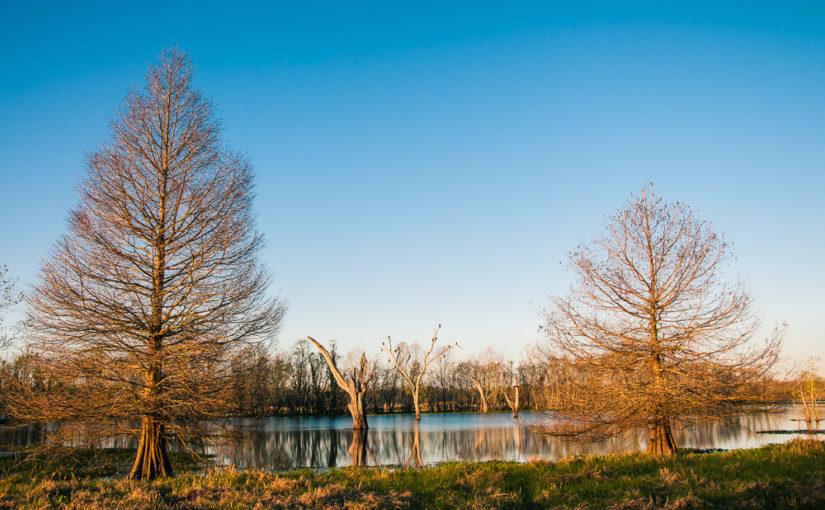 Brazos Bend State Park: Sunrise Birding #2
