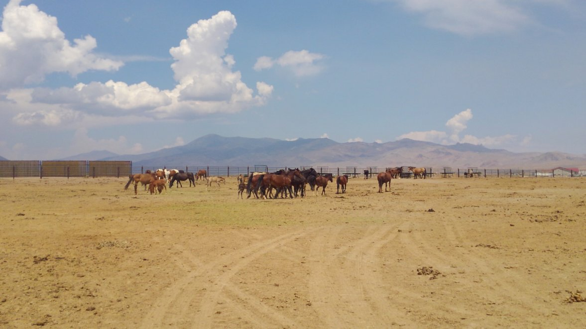 Nevada's Wild Horses – State of Wilderness